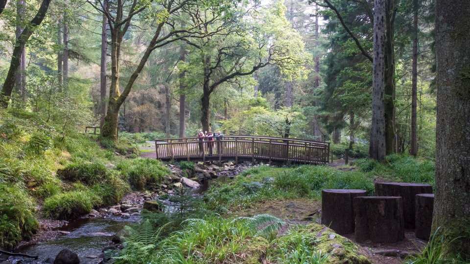 Forest Walks from the Forth Inn