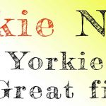 Yorkie Night 19th Jan